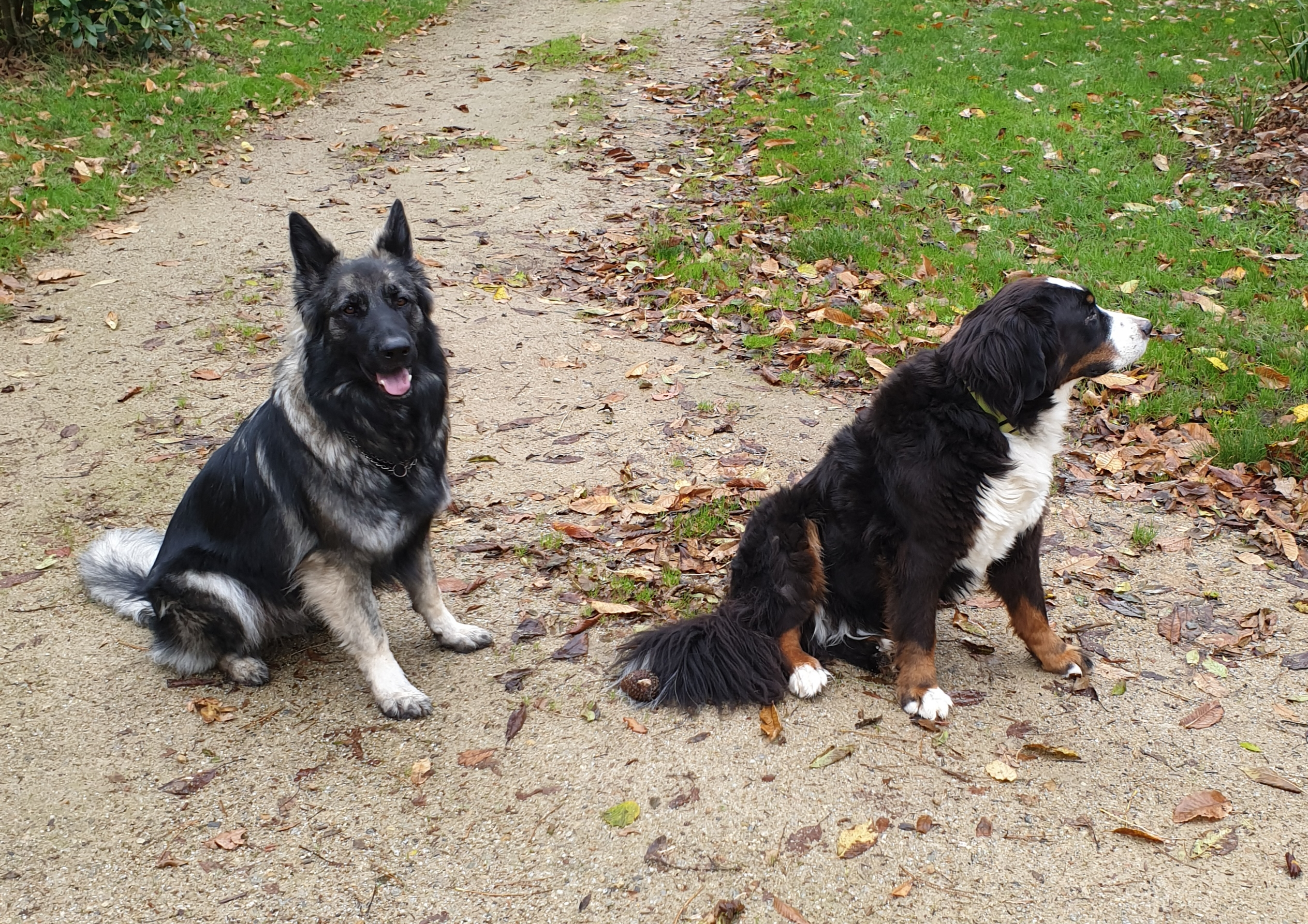 Camping Le Kergariou - Flower Campings Camping acceptant les chiens ok chien Clohars-Carnoët