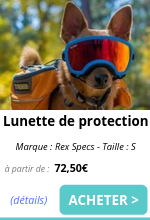 Lunette de protection Small EmmeneTonChien.com.png
