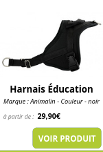 harnais animalin emmenetonchien vacances.png