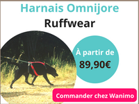 harnais canicross pour chien omnijore ruffwear.png