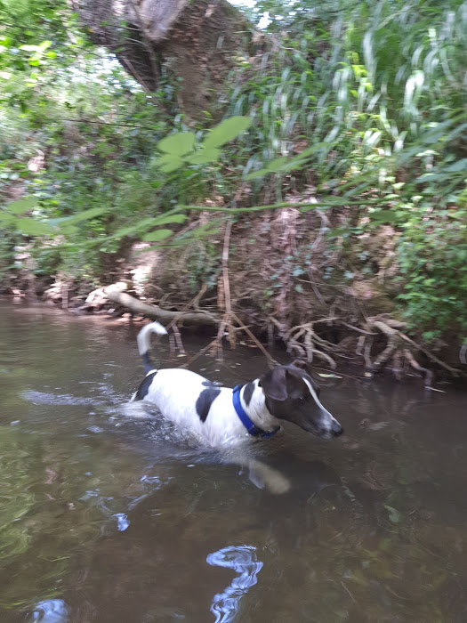 Camping La Pujade  Camping acceptant les chiens ok chien ALZONNE