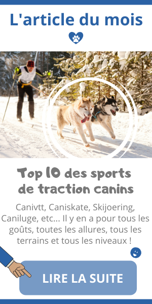 top 10 sport canin de traction