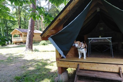 Camping Osenbach  Camping acceptant les chiens ok chien Osenbach